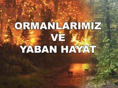 EMİN EĞRİ İLE ORMANLAR VE YABAN HAYAT 17.08.2021